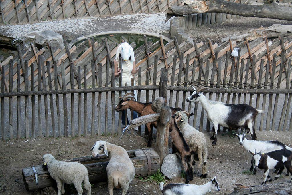 """Szene aus der Performance """"Schaf und Esel"""" – bei den Ziegen"""